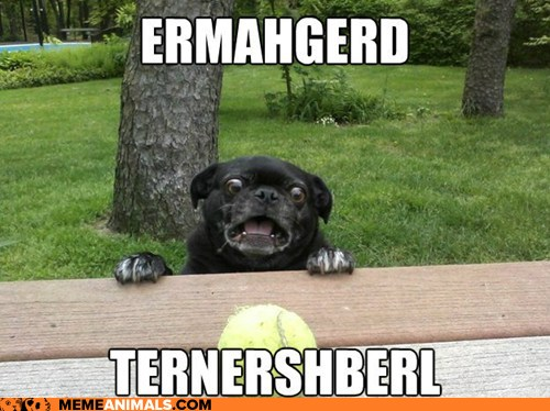 ermahgerd dog